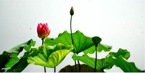 【乌金石健康知识】六月养生五要点,让你健康过夏天