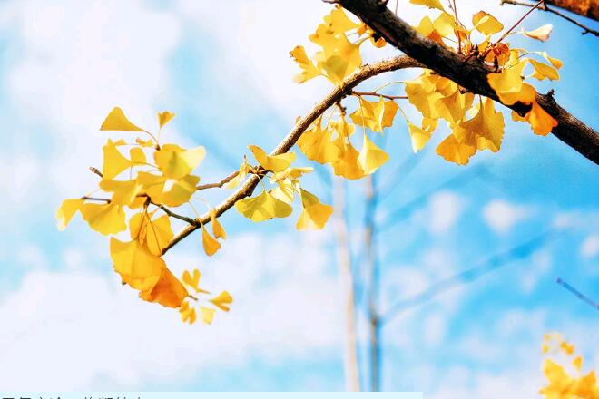 乌ballbet贝博app西甲大健康提醒:寒露这样养,秋冬不生病